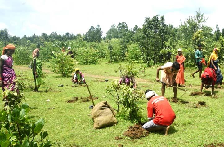 CO2-Ausgleich - Wir pflanzen Bäume
